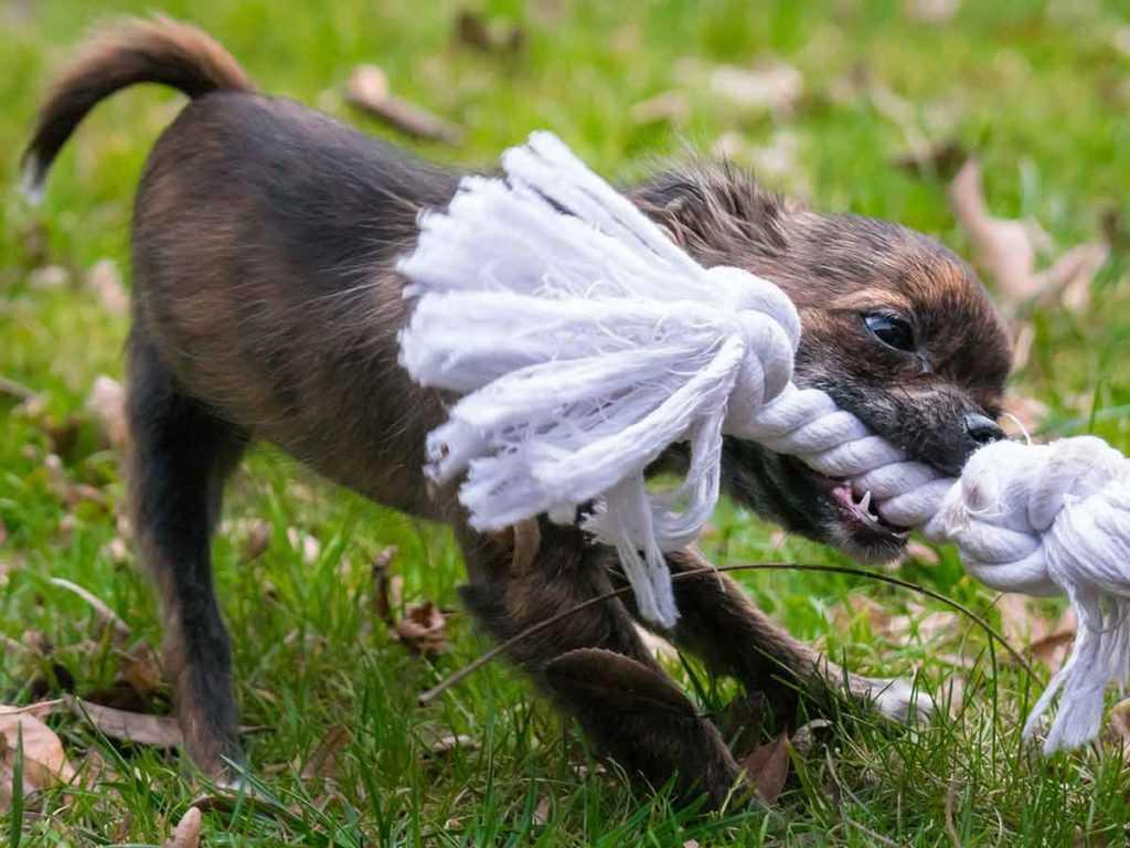 Hundespielzeug Hunde