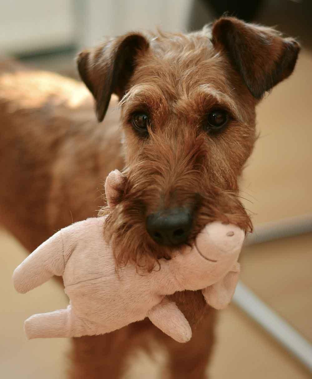 hundespielzeug Spielzeug für Hunde