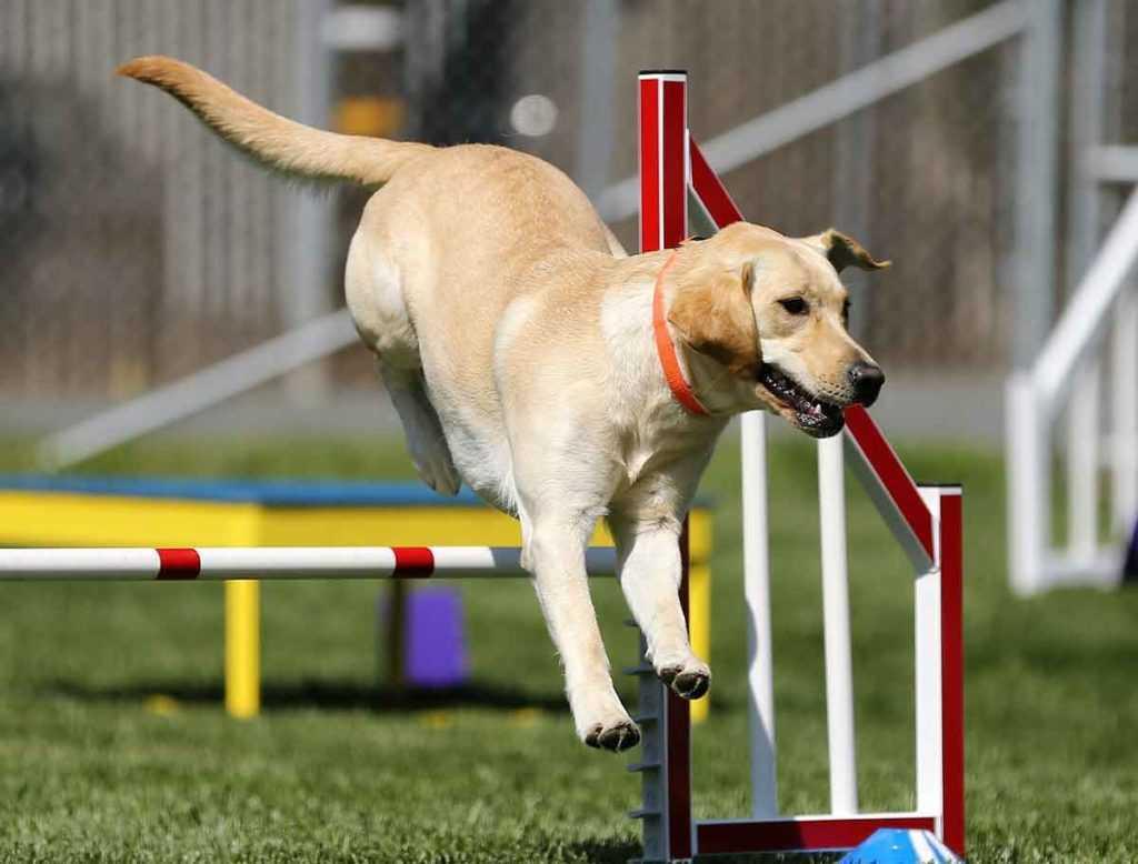 Hundesport Hundetraining Hunde